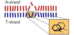 UV-induced structural changes of model DNA helices probed by optical spectroscopy