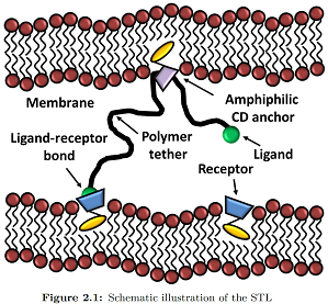 Cyclodextrins, polymers & Membranes