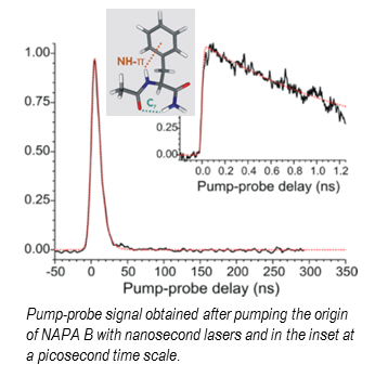 Dynamic of peptids in gas phase and photostability of proteins