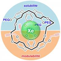 Développement d'une architecture générique pour la construction de sondes moléculaires exploitant l'IRM du xénon 129