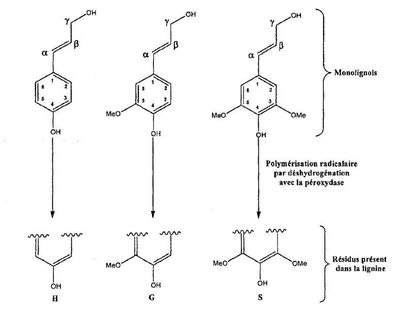 Brevet : Procédé de préparation de composés aromatiques à partir de la lignine