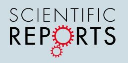 Scientifics Reports