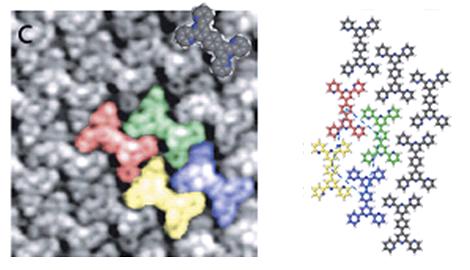 Films organiques auto-assemblés bidimensionnels de structures ajustables