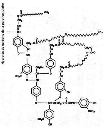 Brevet :  Procédé de dépolymérisation de matériaux polymères oxygénés.