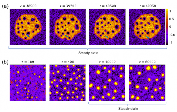 Cluster Phases and Bubbly Phase Separation in Active Fluids