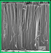 Synthèse en une seule étape de tapis de nanotubes de carbone verticalement alignés sur feuilles d'aluminium