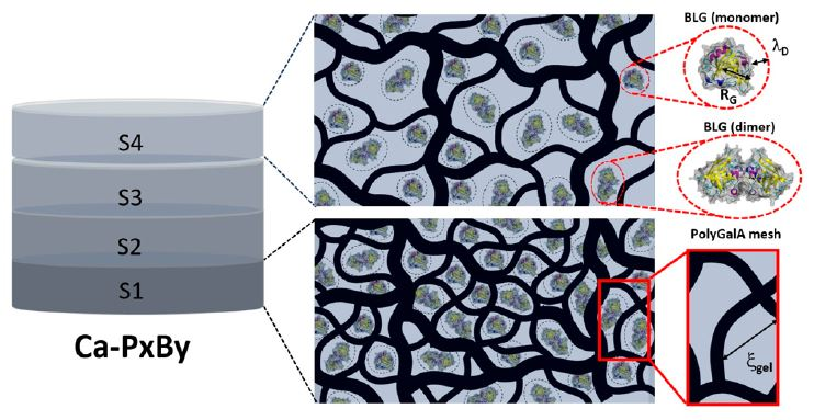 Controlled Loading and Release of Beta-Lactoglobulin in Calcium-Polygalacturonate Hydrogels