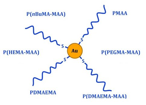 Structure, captation cellulaire, migration et toxicité de nanoparticules métalliques greffées de polymères pour la nanomédecine