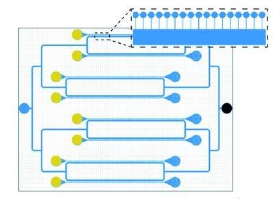 Apport de la microfluidique pour accélérer les études d'accumulation de mutations modèles