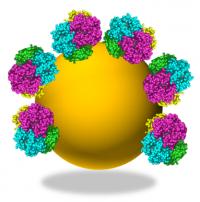 Vers un substitut sanguin à base de nanoparticules de silice