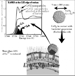 Ecotoxicity of nanoparticles