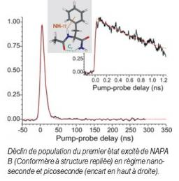 Biomolécules en phase gazeuse / Etat électronique Excité