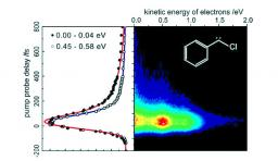 Femtosecond Dynamics of Isolated Phenylcarbenes