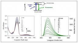 Chemical sensors of air pollutants