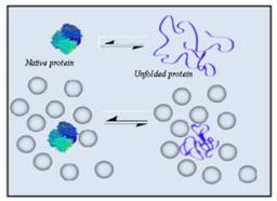 Influence of macromolecular crowding on protein stability.