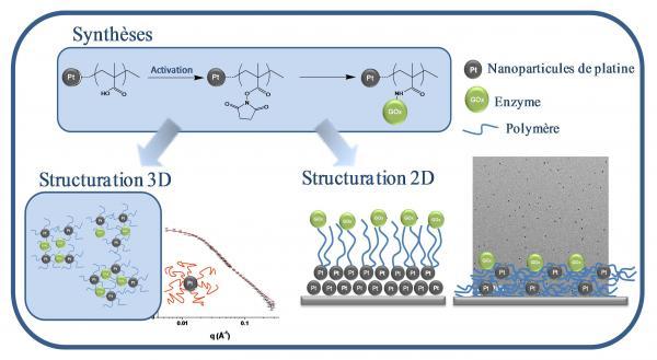 Nanocomposites pour la biodétection