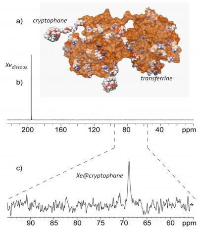 NMR detection of cellular internalization of hyperpolarized xenon: application to transferrin