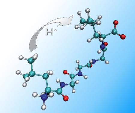 Quand les radicaux sautent  d''acide aminé en acide aminé !