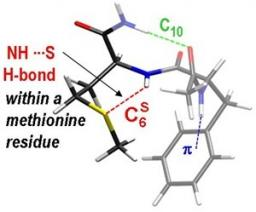 La force des liaisons NHamide---Sméthionine révélée par la spectroscopie de petits peptides