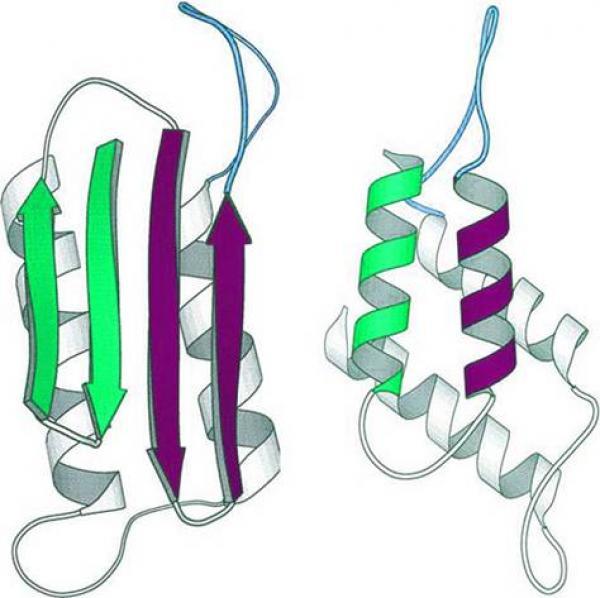 Physique de systèmes (modèles) biologiques