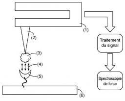 Brevet: Sonde de microscope à force atomique, son procédé de préparation et ses utilisations