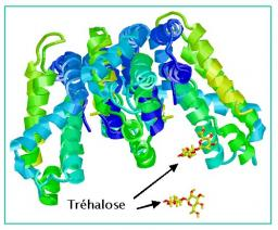 Etudes de protéines par diffusion neutronique