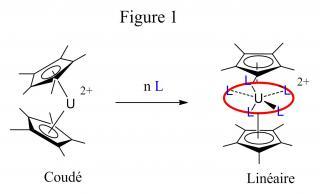 Des sandwichs d'actinides réactifs et à géométrie variable