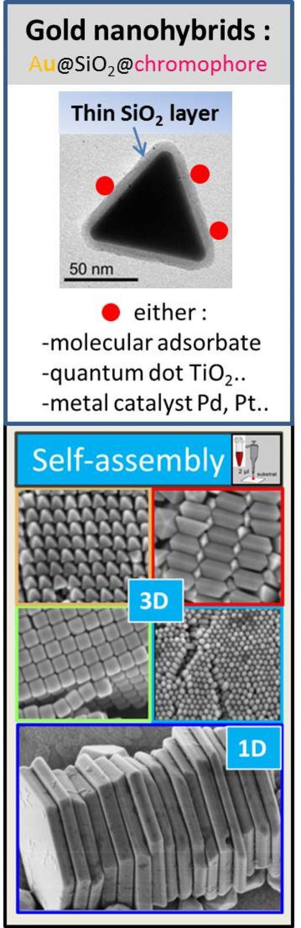 Nanoparticules d'or pour la plasmonique et la nanomédecine