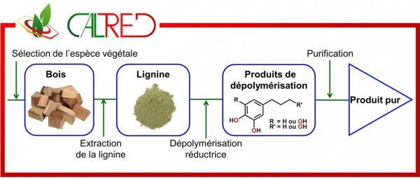 Une nouvelle stratégie pour récupérer des composés aromatiques à partir de déchets de bois