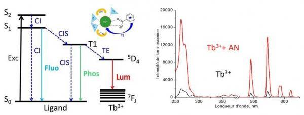 Le terbium pour une méthode optique de diagnostic de la tuberculose