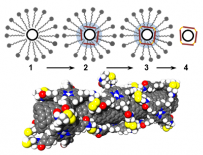 Carbon nanotubes and graphene functionalization