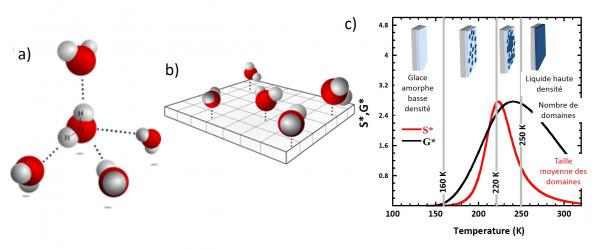 Competing coexisting phases in two-dimensional water
