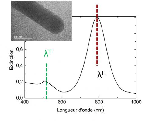 Absorption résonante plasmon à l'origine de la luminescence de nanoparticules d'or