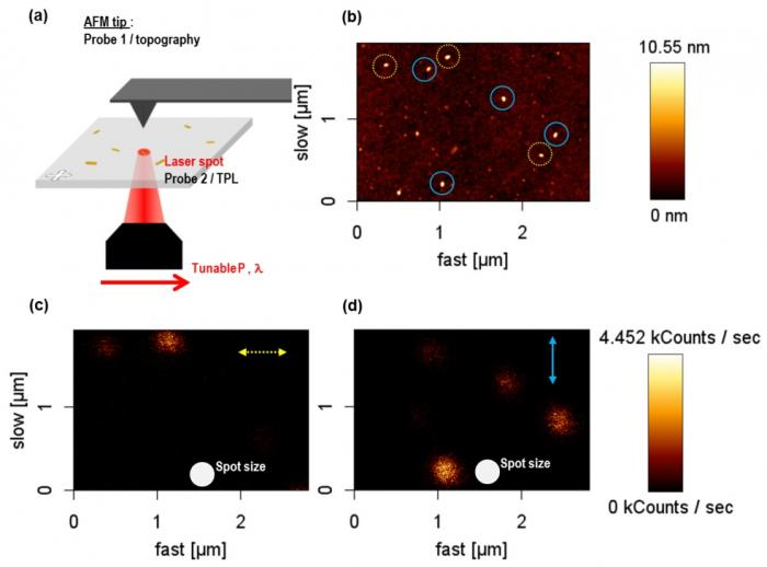 Absorption résonante plasmon à l'origine de la luminescence de nanoparticules d'or