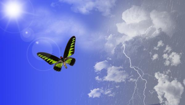 Un papillon encore plus turbulent
