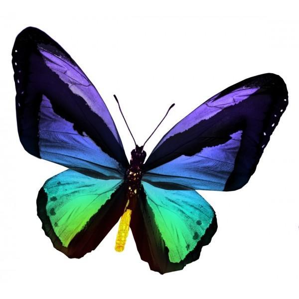 Un papillon encore plus turbulent (suite...)