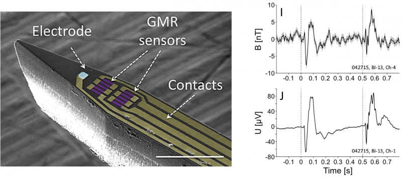 In vivo local recording of the magnetic signature of neurons