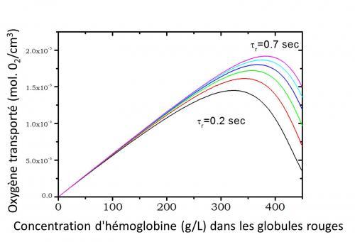 Diffusion de l'hémoglobine : impact sur le transport d'oxygène par les globules rouges
