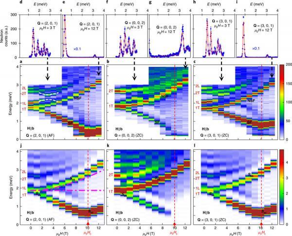 La diffusion de neutrons révèle une nouvelle classe de transitions entre phases topologiques