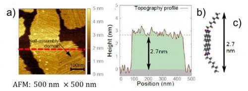Réalisation et étude d\'un couplage optique fort entre une couche mince de molécules auto-assemblées et les plasmons de surface