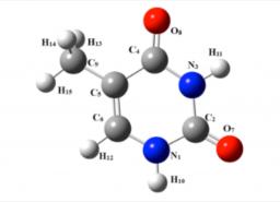 Photoionization dynamics of biological relevant molecules