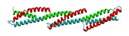 Human Dystrophin Structural Changes upon Binding to Anionic Membrane Lipids