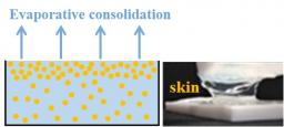 Structuration of the surface layer during drying of colloidal dispersions