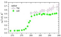 Dynamics properties of photosynthetic microorganisms probed by incoherent neutron scattering