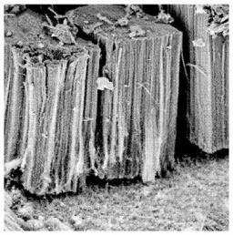 Brevet : Procédé de préparation d'une électrode comprenant un support en aluminium, des nanotubes de carbone alignés et un polymère organique électro-conducteur, la dite électrode et ses utilisations