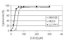 Toxicité, transport, accumulation et répartition de métaux lourds et radionucléides dans des cellules épithéliales. Spéciation interne et externe du toxique. Décorporation