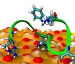 Importance des modifications chimiques des protéines pour leurs interactions avec les nanoparticules