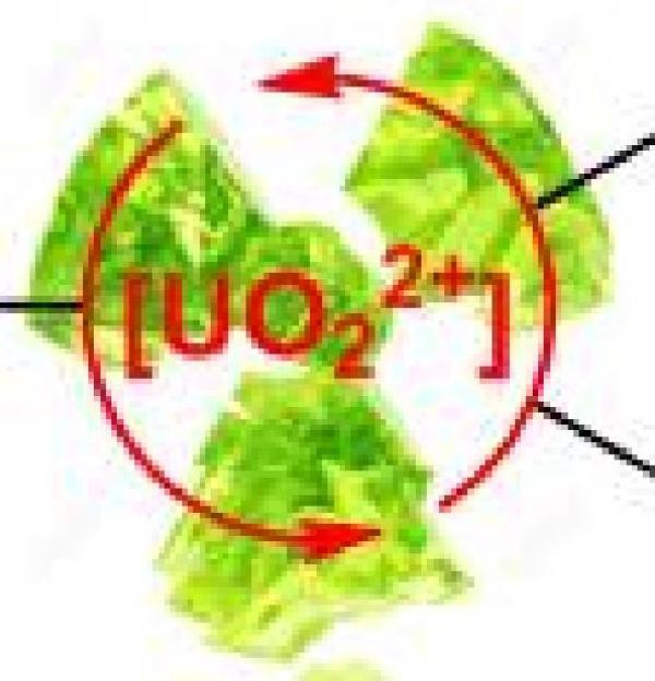L'ion uranyle [UO2]2+ : un catalyseur efficace pour la réduction de doubles liaisons C=O