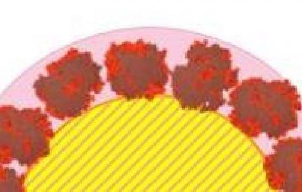 La couronne de protéines adsorbées sur des nanoparticules de silice dévoile sa structure