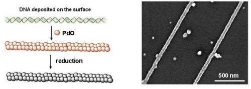 DNA based selfassembly of carbon nanotube transistors